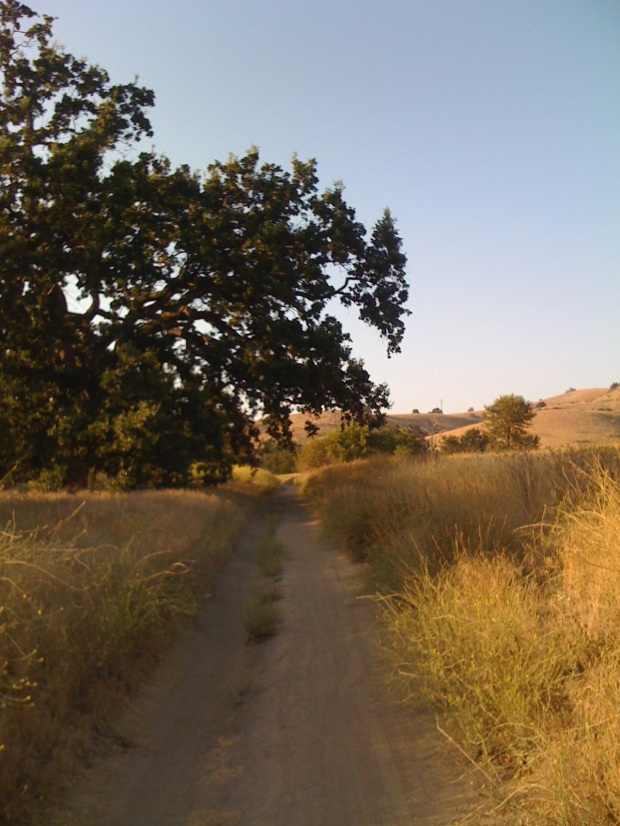 Trail in Cheeseboro Canyon, National Park land near Los Angeles.