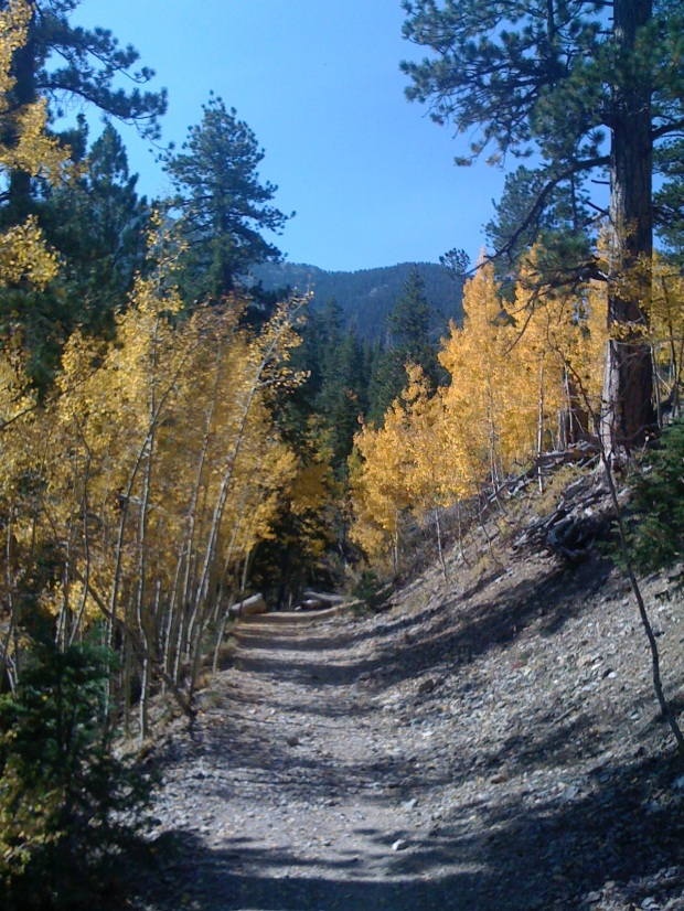 Fall Colors. Mt Charleston near Las Vegas, Nevada.